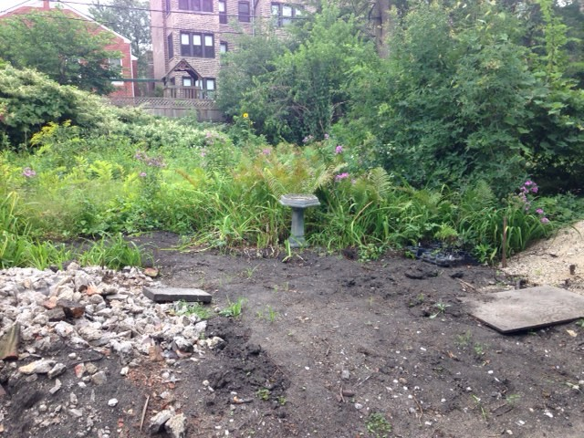 backyard_august