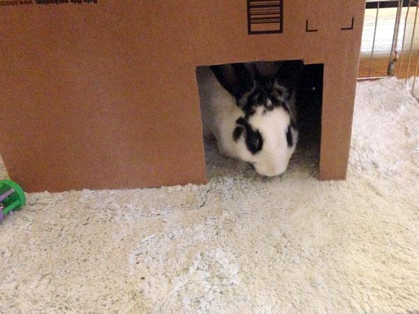 Daisy in her Box