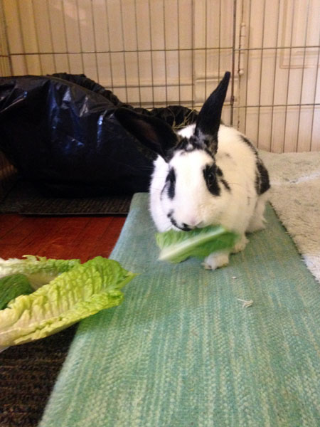 Daisy with Romaine