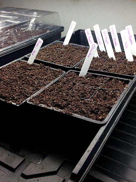 Veggie Garden Plans